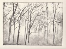 Woods etching. Dry point print of woods in black ink vector illustration