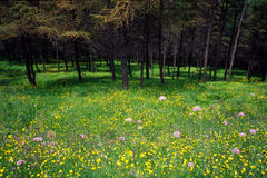 Woods and flowers Royalty Free Stock Photography