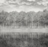 Woods and fog. Beautiful landscape of a woods of poplar reflected in the water with foggy and cloudy sky in black and white Stock Photography