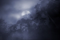 Woods in a foggy full moon night Stock Photo