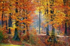 Woods, Forest, Nature, Landscape Stock Image