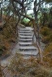 Woods fragment Stock Image