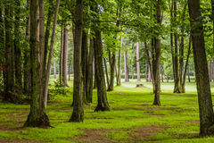In the woods of  Golf Course. In the woods of a beautiful Golf Course Stock Images