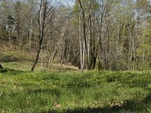 Woods. With grass and flowers Royalty Free Stock Photography