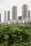 Woods with high rise buildings Stock Photography