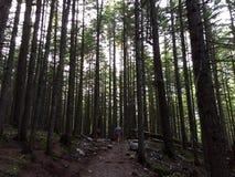 Woods Stock Photo