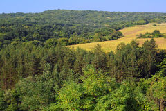 Woods on the Hill and Sunflower Field Stock Photography