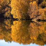 Woods lake in autumn Stock Image