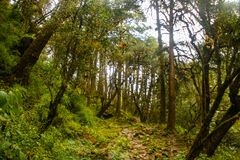 The woods of Langtang National Park royalty free stock images
