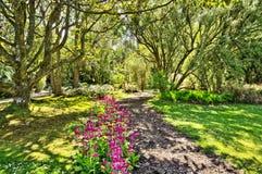 Woods in Logan Botanic Gardens Stock Photography