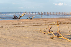 Woods logs beach sea shore bush branch pollution dirt, ocean waves sand. royalty free stock photography