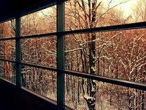 The Woods Are Lovely. A photograph of snow covered trees through multiple windowpanes Stock Images