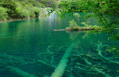 Woods in Magic Mirror Lake. This was shot in Jiuzhaigou of China in May 2009 Royalty Free Stock Photography
