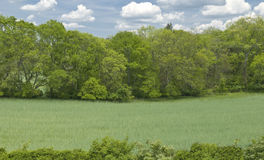 Woods and Meadow Stock Photo