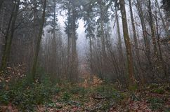 In the Woods. Mood lighted image in the Black Forest, Germany Royalty Free Stock Image