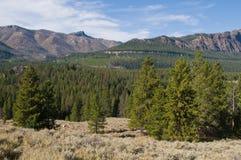 Woods & mountains Stock Photo