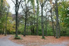 A run in the woods. Woods in Munich. Lady running at the distance Stock Image