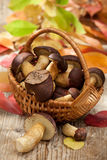 Woods mushrooms in woven basket on wooden table Stock Photo
