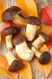 Woods mushrooms and yellow autumn leaves Stock Photos