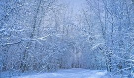 White woods nature with crazy landscape at cold day royalty free stock images