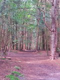 Woods of The Netherlands. Walking trough trees in the netherlands near Hilversum Royalty Free Stock Photos
