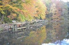 In the woods, Noordoostpolder, Netherlands royalty free stock images
