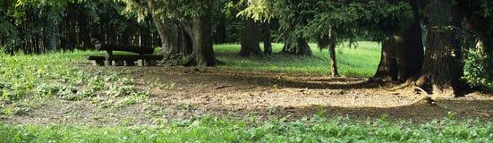 woods odpoczynku Zdjęcia Royalty Free