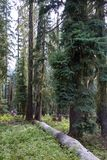 The woods, Oregon Royalty Free Stock Photos