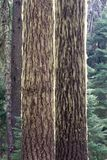 The woods, Oregon Royalty Free Stock Photography