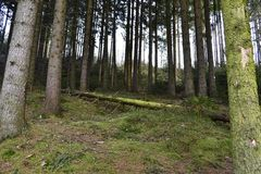 In the woods. Overgrown with moss fallen tree in the middle of the forest Stock Images