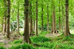 woods Stock Photos