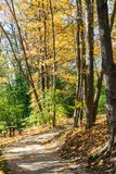 Woods at park with trails and picnic table Royalty Free Stock Photo
