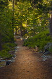 Woods Path Stock Photo