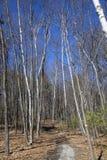 Woods Royalty Free Stock Photo