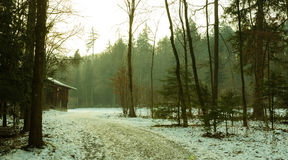 Woods path in winter. Woods path and cabin in winter Stock Image