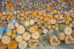 Woods pile close up view Royalty Free Stock Image
