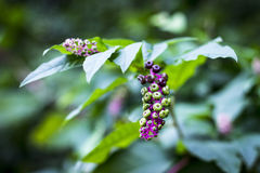Woods plant berries buds Royalty Free Stock Photo
