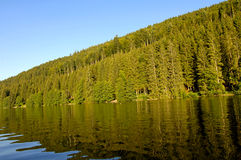 Woods Reflections in Titisee Royalty Free Stock Images
