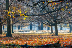 Woods in Richmond Park. London stock images