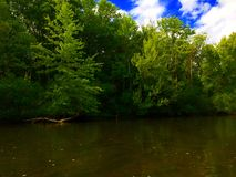 Woods By A River. Dense woods on the side of a river Stock Photography