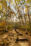 Woods road. Autumn, backlit shooting woods road, post processing using hdr Royalty Free Stock Photo