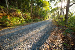 Woods road Royalty Free Stock Images