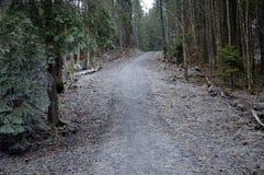 Woods Stock Image