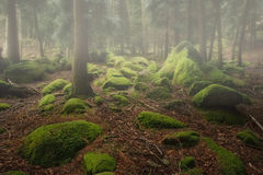 Woods rocks covered with moss Stock Images