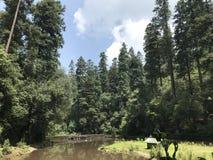 Woods See Lizenzfreie Stockfotografie