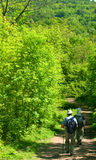 woods seniorów Obrazy Stock