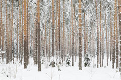 Woods Royalty Free Stock Images
