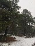 The woods in a snow storm Royalty Free Stock Image