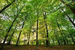 Woods. Spring in the forest seen from below Royalty Free Stock Image