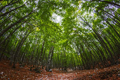 Woods in Spring. Fotrest in Spring in Abruzzo, Italy Stock Photos